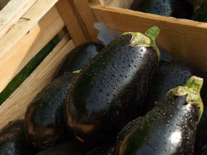 auberginen-doerren