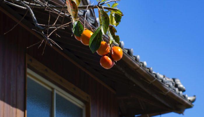 Kaki-Orangen-Marmelade-einkochen