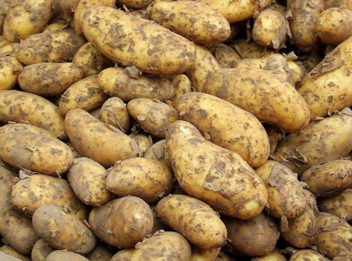 kartoffel-einkochen
