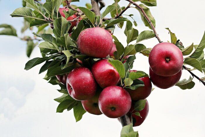 aepfel-raeuchern